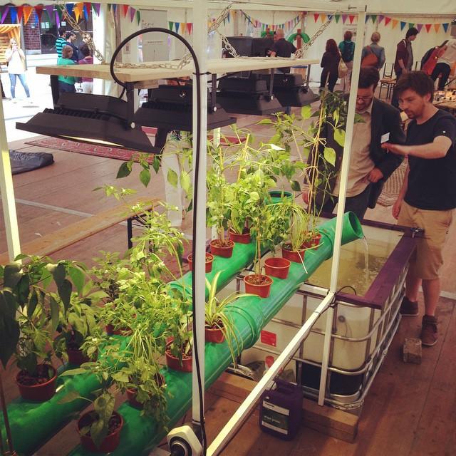 Jan Bunse zeigt Umweltamt Chili und Aquaponik Prototyp