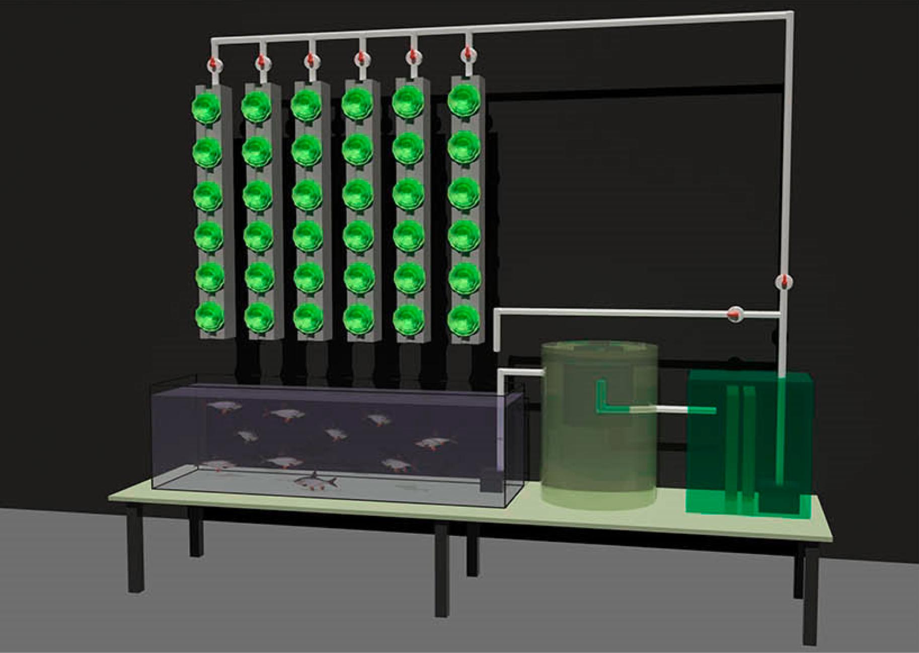 Unsere Aquaponik-Pläne für 2015