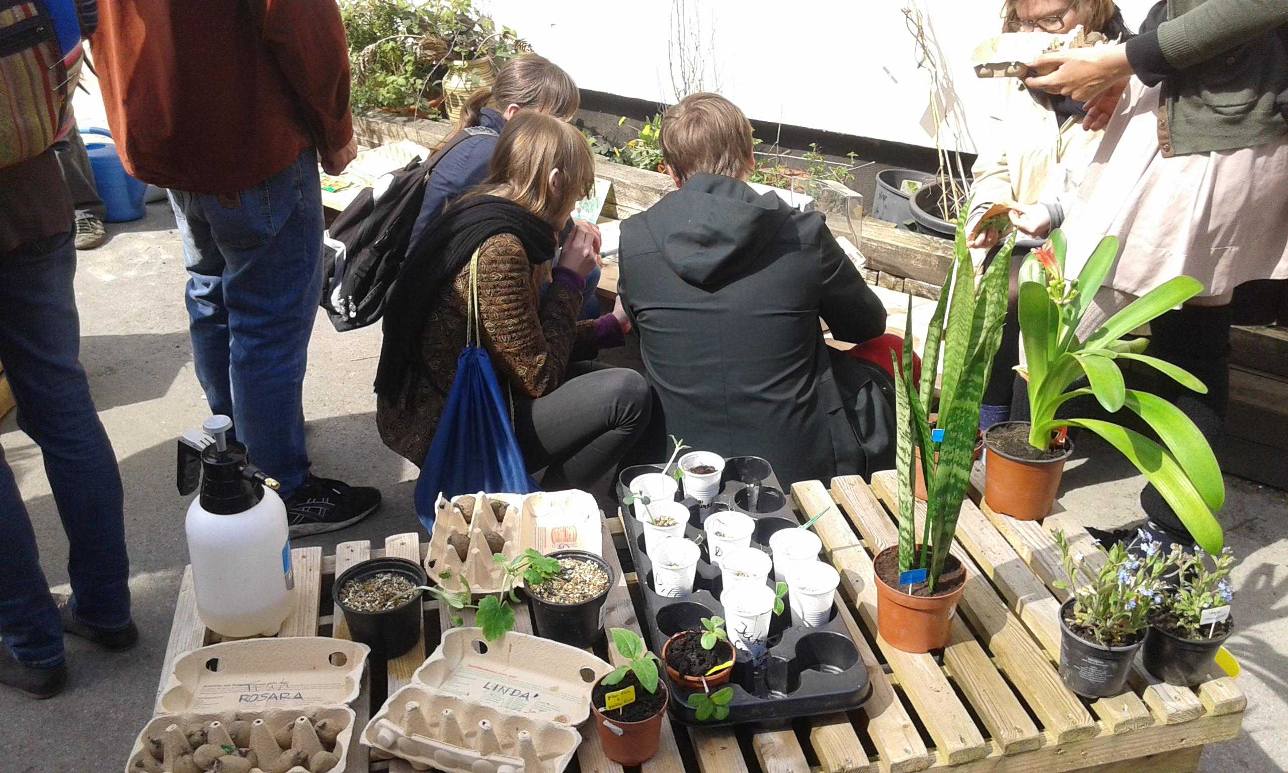 Pflanzentauschbörse: Diesen Sonntag im Union Gewerbehof