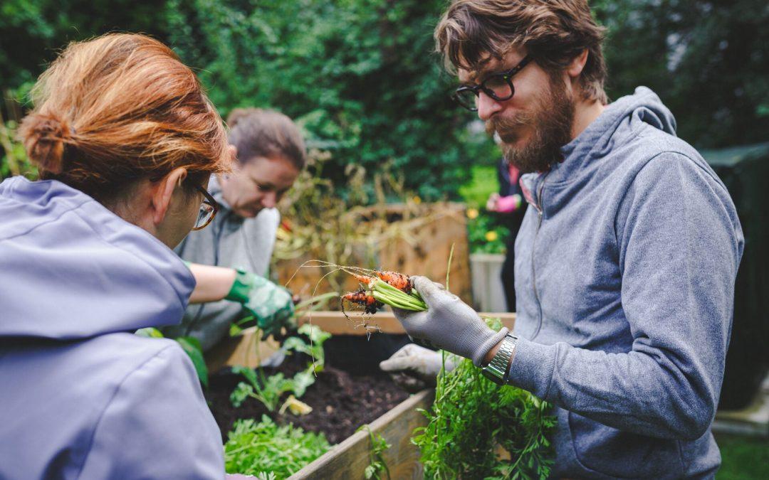 Leckeres Gemüse in der Stadt – Die erste Saison im Westgarten