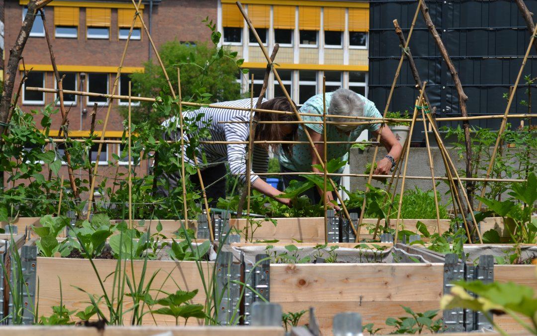 Es grünt so grün im Westgarten