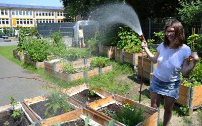 Ein Dach für unsere Tomaten