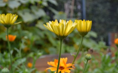 Möbel für den Westgarten, Bienen für die Stadt