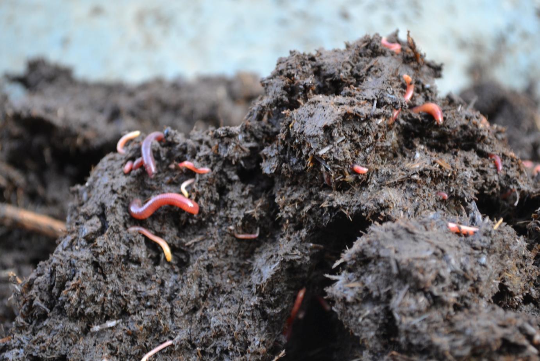 Forum: Gesunder Gartenboden